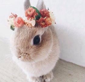 Pretty Rabbit flower crown
