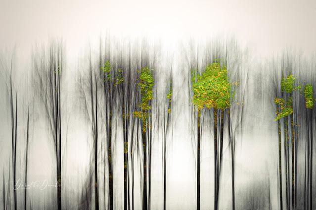 winter, trees, impressionistisch, contemporaryart, art, abstract, icm, gestische Fotografie, photoart, textureblend, Sauerland, Dorothe Domke