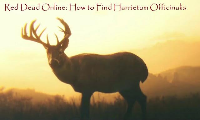 Red Dead Online: How to Find Harrietum Officinalis