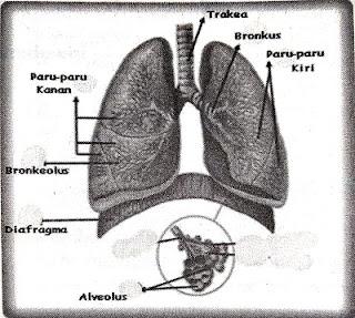 Materi Sistem Pernapasan