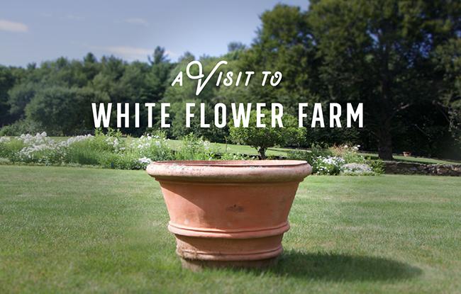 Growing with plants a summer visit to connecticuts white flower a summer visit to connecticuts white flower farm nursery mightylinksfo