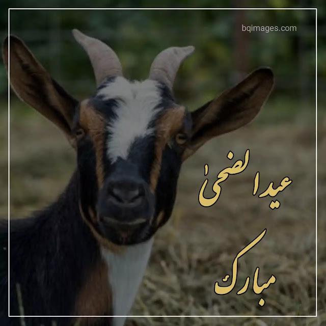 Eid ul Adha Mubarak wishes images
