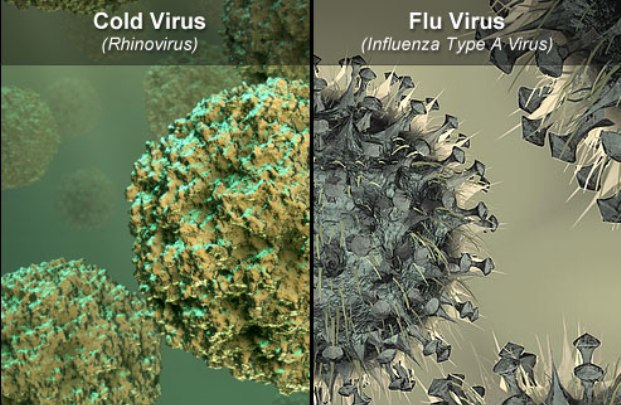 Cold vs. Flu: How to Tell the Difference