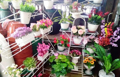 pusat jual bibit tanaman hias kota Bogor