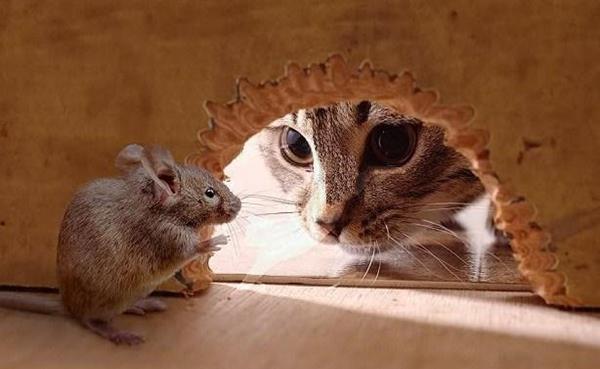 6 Cara Mengusir Tikus Dari Rumah Secara Alami Paling Ampuh