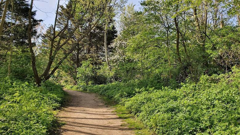 在原始自然公園內散步