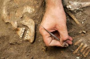 Найдены сохранившиеся клетки мозга человека V века до нашей эры