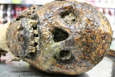 Is this the skull of a bigfoot