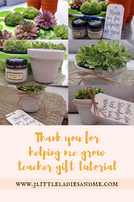 Painted plant pots with succulents in and tied with string