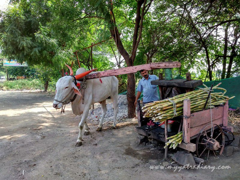 Rasvanthy's or sugarcane juice stalls on the way to Shani Shinganapur near Shirdi