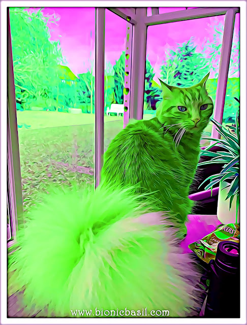 Fudge's Supurr Floof Selfie ©BionicBasil® Caturday Art