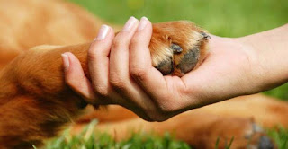 Sonhar com adoção de cachorro