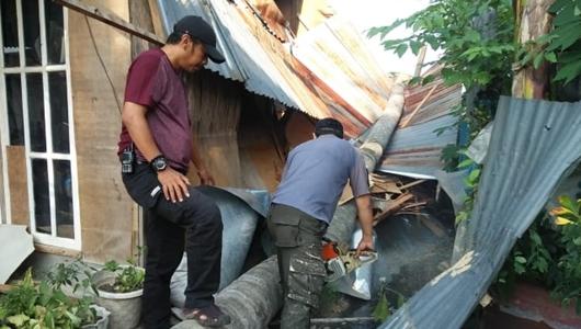 Rumah Khairunissa Rusak Berat Tertimpa Pohon Kelapa