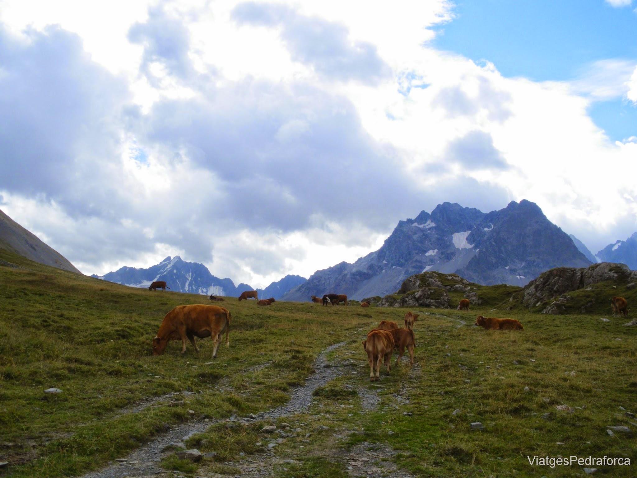 Haute Romanche, Alpe du Villar d'Arene, Hautes Alpes, Parc National des Ecrins, France