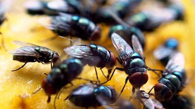 Ngeri, Begini Konsep Penciptaan Lalat yang Digambarkan dalam Alquran