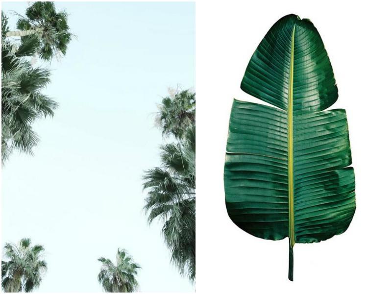 juniqe prints botanical prints