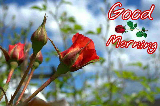 beautiful good morning with red flowers