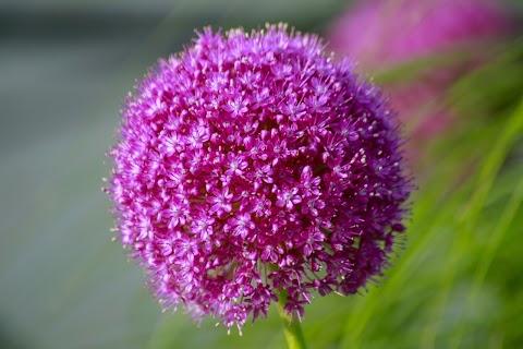 Nụ Hoa Màu Hồng Đẹp