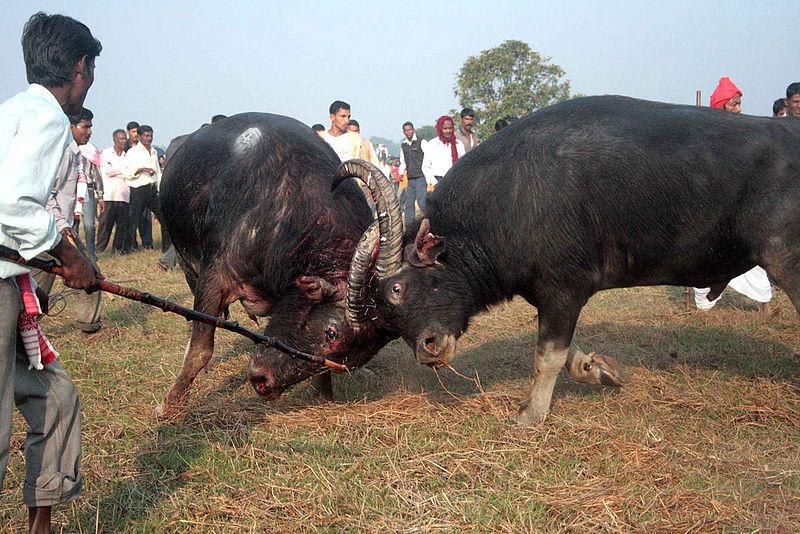 Bhogali or Magh Bihu Stock Photos