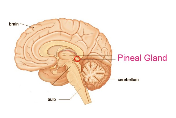 How To Activate Your Pineal Gland:The Science of Third Eye Awakening