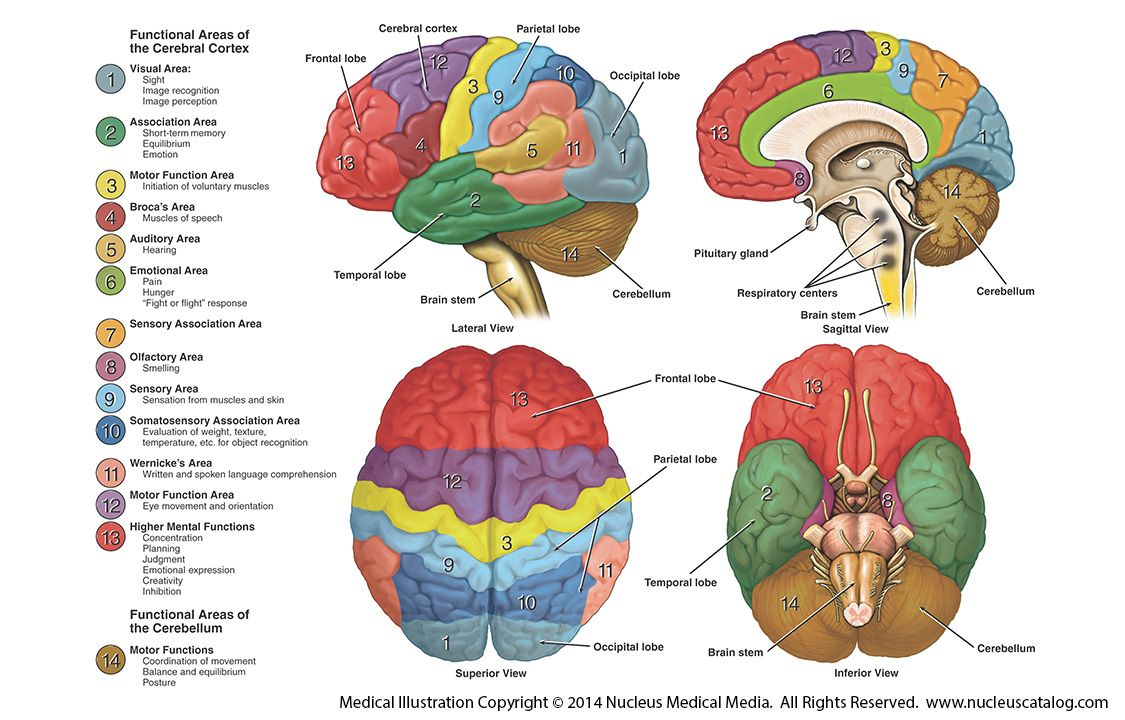 understanding the brain disorder dyslexia symptoms treatments and recovery Dyslexia and dysgraphia resources causes of dysgraphia although the symptoms of severe brain injury are hard to miss, it is less clear for dysgraphia is a neurological disorder characterized by writing disabilities.