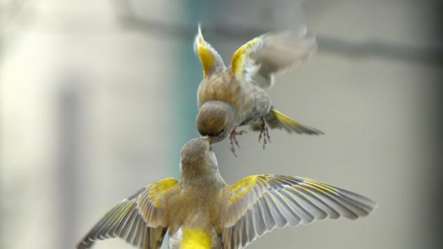 صور خلفيات, صور خلفيات 4k, اجمل واغرب طيور العالم,اجمل طيور العالم,Wallpapers, خلفيات طيور, خلفيات