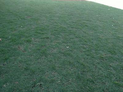 Jenis Rumput Taman Golf Dan Harganya