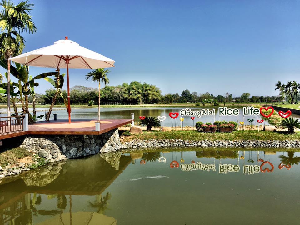 Chiang Mai Rice Life