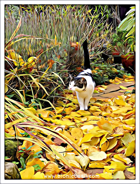 Melvyn's Autumn Adventure ©BionicBasil® Caturday Art