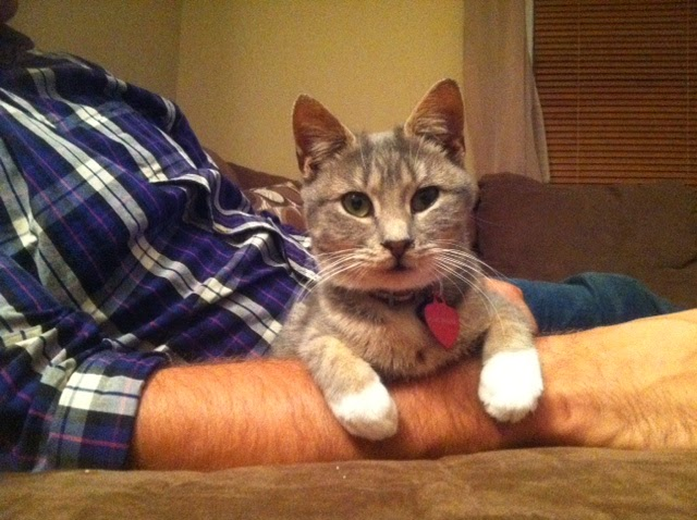 Who Knew That Cats Are Their Protectors >> Update Gretchin Protectors Of Animals