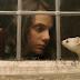 Nova série de ficção da HBO, 'His Dark Materials' estreia dia 4 de novembro
