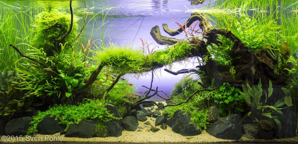 Bể thủy sinh cầu vòng kích thước 80 x 35 x 40 cm