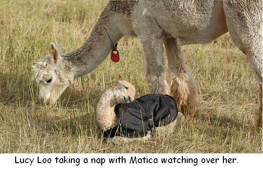 Alpaca Overview