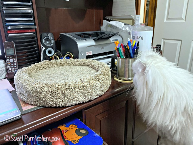 Silver shaded Persian, Truffle, looking at the Desk Topper from Purrnuture
