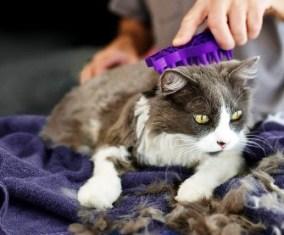 Langkah-langkah Melakuka Grooming Kucing yang Benar