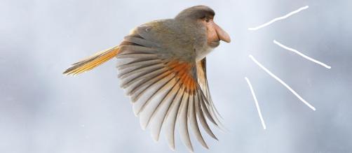 Geli! 10 Spesies Hewan Baru yang Lahir Berkat Photoshop (Part 1) + Foto