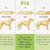 Πότε είναι ο σκύλος παχύσαρκος; Δείτε το σχεδιάγραμμα...