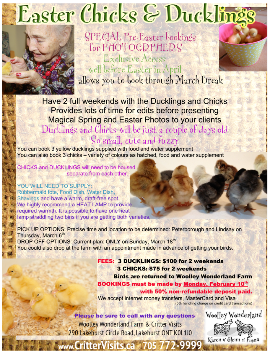image Flyer Chicks Ducks for spring photography