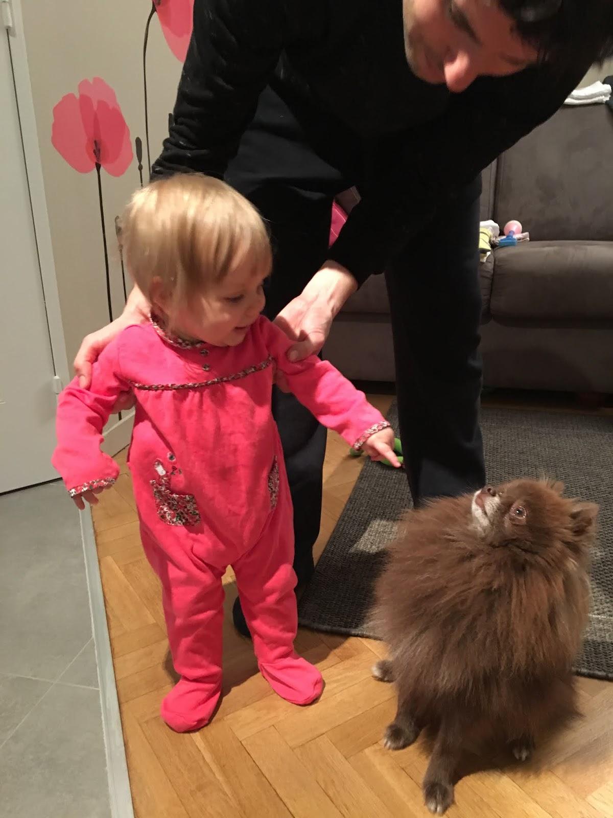 Pomeranian kääpiökoira ja vauva