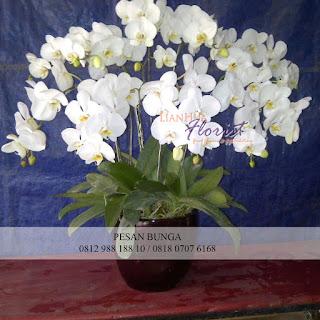 rangkaian bunga meja anggrek bulan, bunga meja anggrek bulan, rangkaian bunga anggrek bulan, flower advisor,