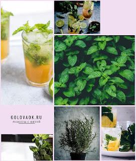 рецепты настоек с листьями мяты