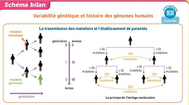 """تحميل درس """" variabilité génétique"""" بحلة جديدة وفق برنامج 2019 باللغة الفرنسية"""