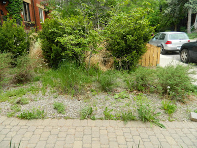 Leslieville summer garden weeding and cleanup before by Paul Jung Gardening Services Toronto