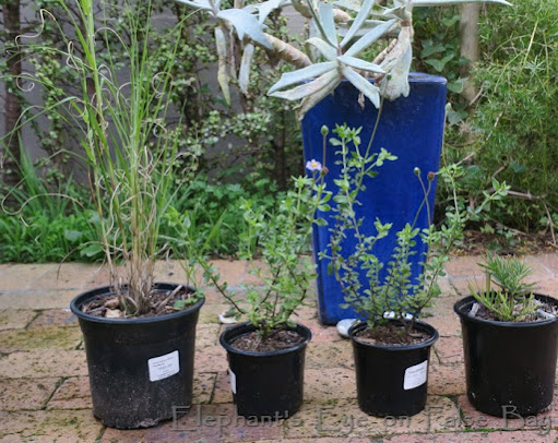 New plants from Good Hope Gardens Nursery