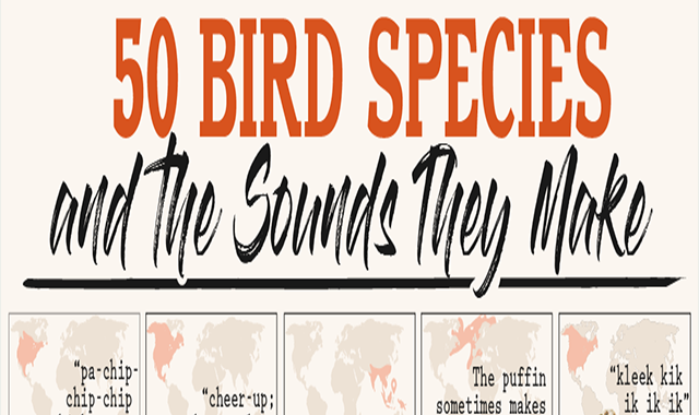 50 Bird Species and the Sounds They Make #infographic