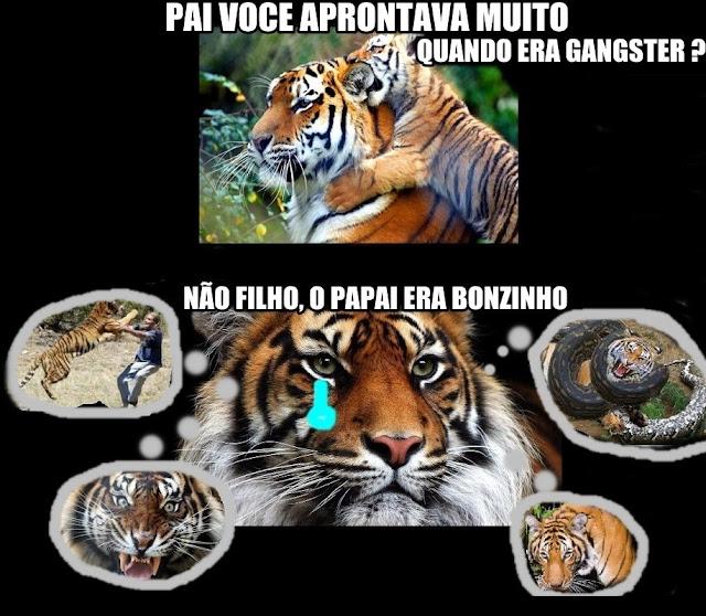 Tigres V Scorpions underproductz: ...