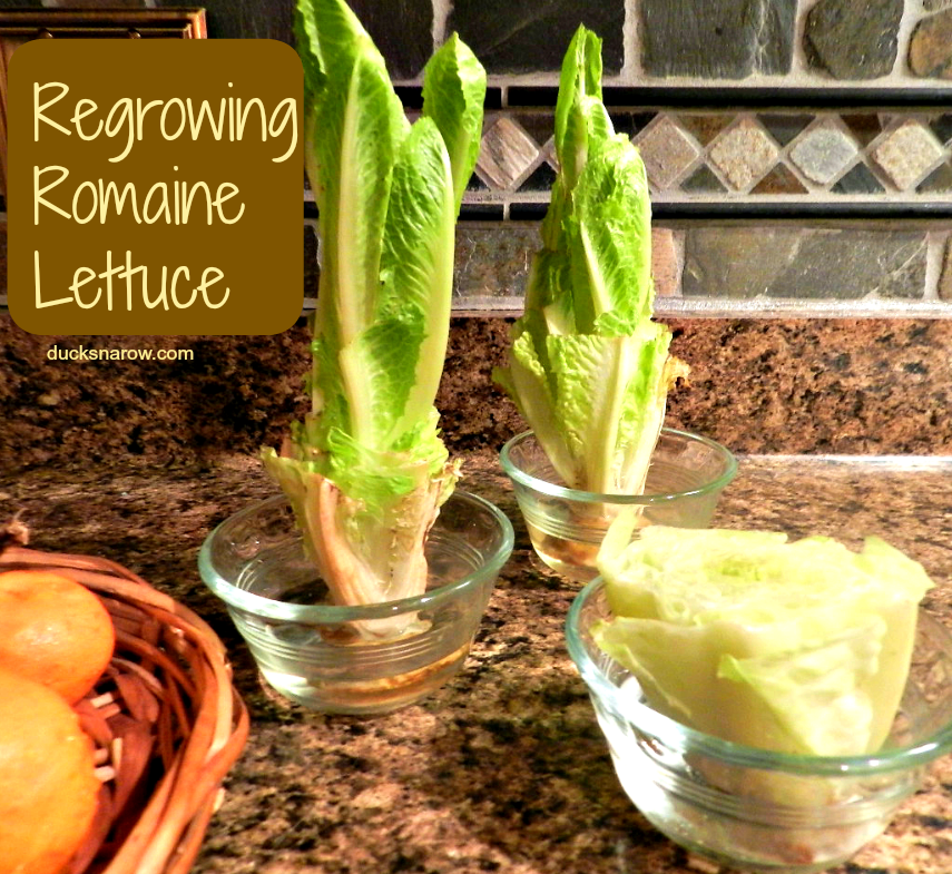 10 Vegetables You Can Regrow Yourself From Kitchen Scraps: 10 Smart Mom Tricks You Will Just Love