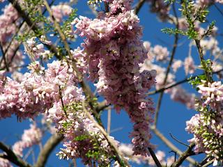 Madero Negro Flowers