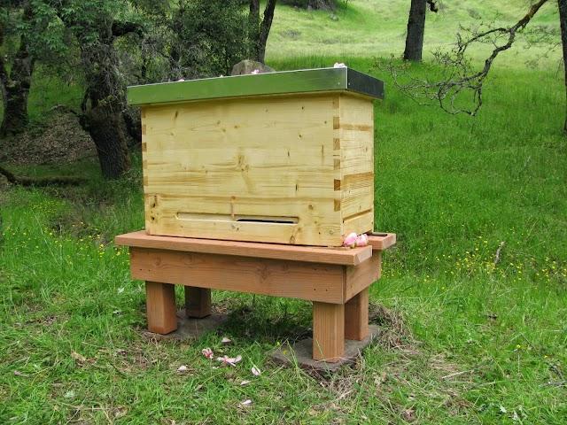 Πολλαπλασιασμός μελισσιών: Από ένα μελίσσι 18 παραφυάδες!
