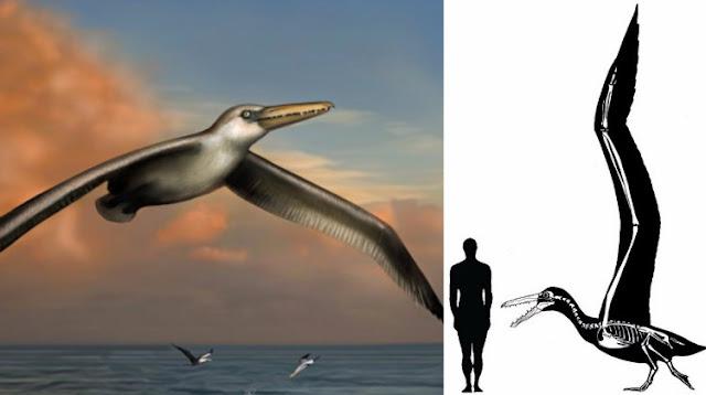 طيور عملاقة من الزمن السحيق